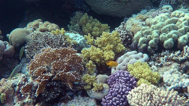 Передвижение красного коралла