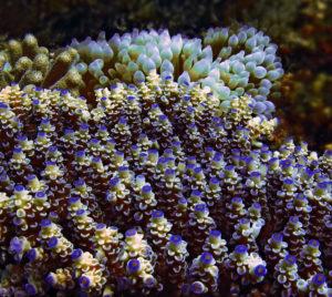 Кораллы — фото
