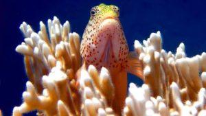 Кораллы это животные или растения