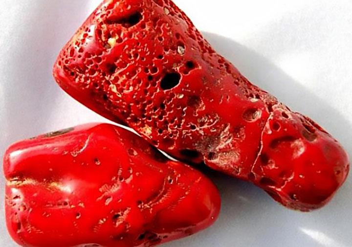 Чем питается красный коралл