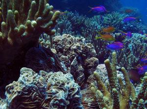 Виды кораллов по цвету